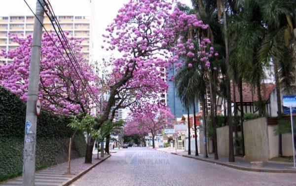 Coronel Quirino, rua onde será o breve lançamento no Cambuí da CRB Construtora