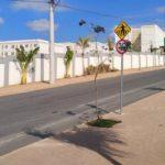 Parque Canto Dos Bem Te Vis Mrv Foto Canarios
